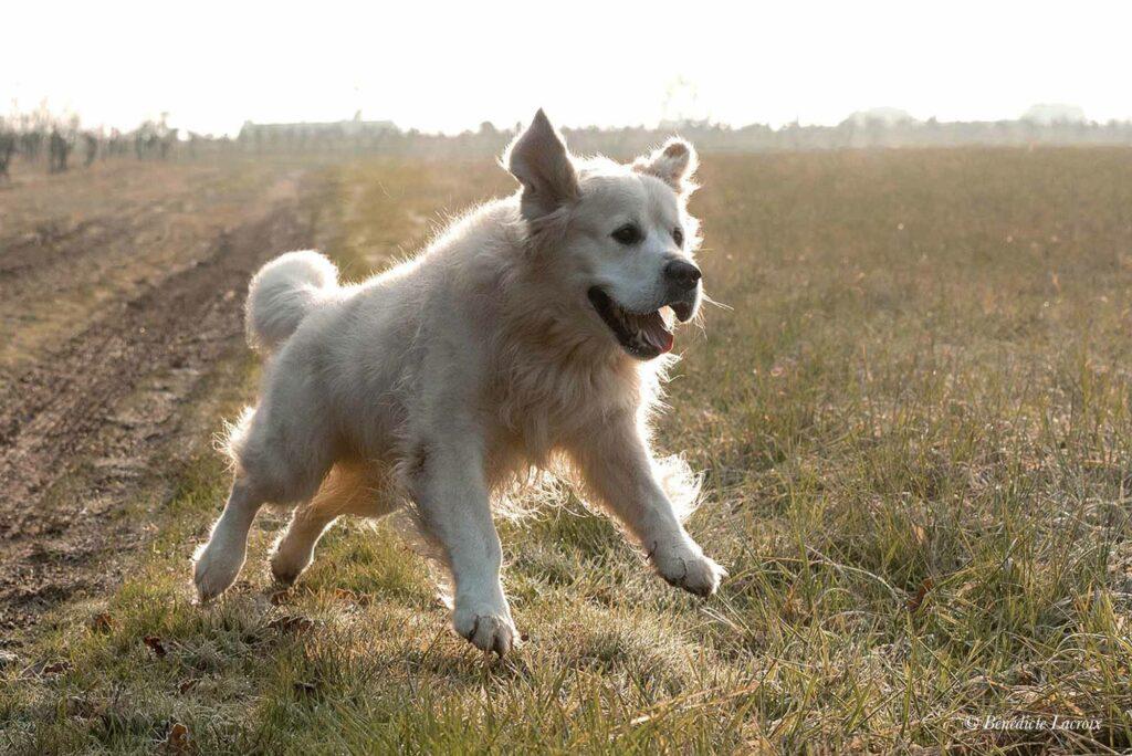 chien saute photo clisson