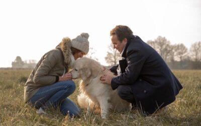 Clisson, un reportage photo hivernal d'un couple et son chien.