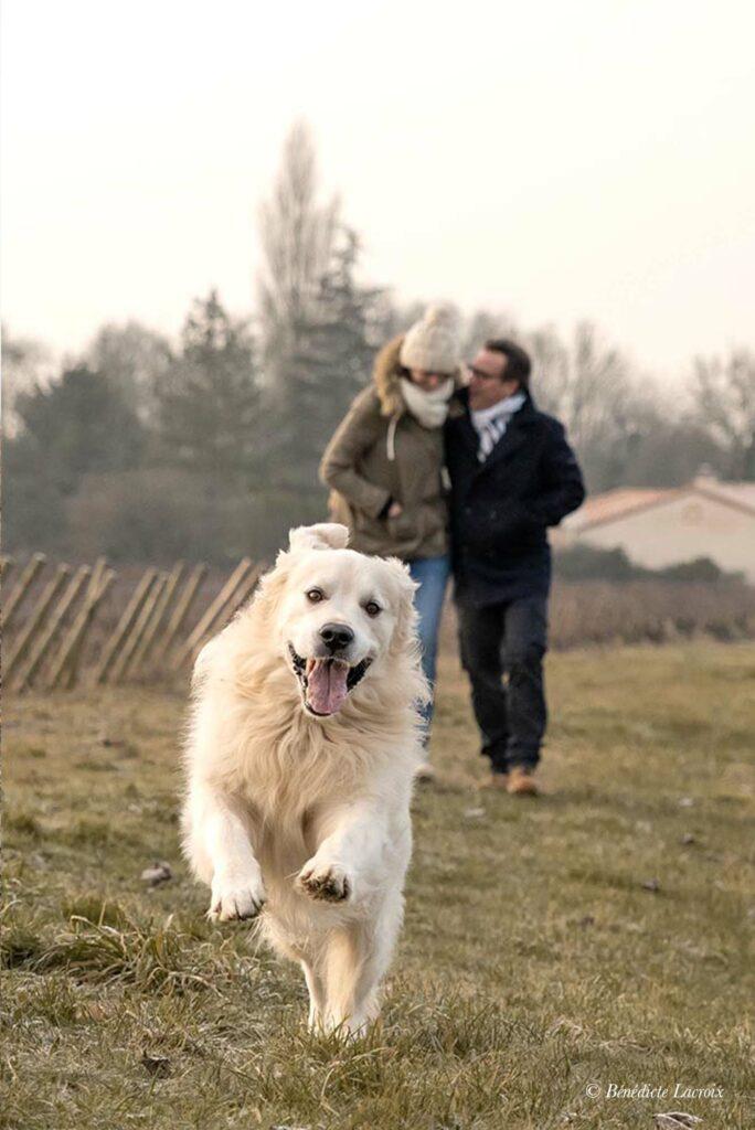 photographe clisson couple et chien